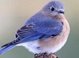 Twitter Bird 1024x384